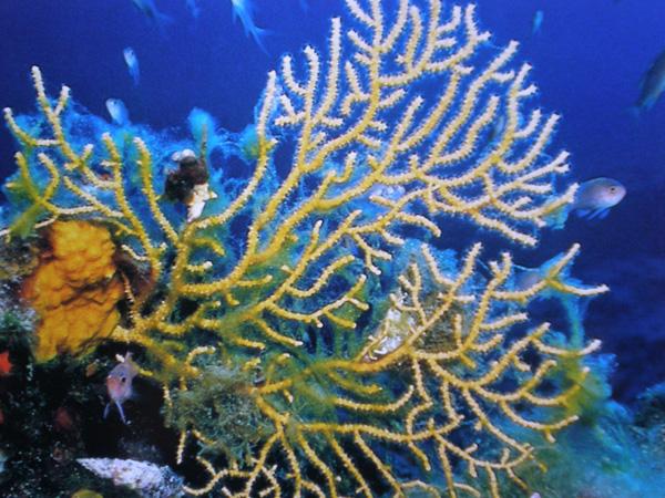 Image result for photos et images faune et flore de la mer méditerranée
